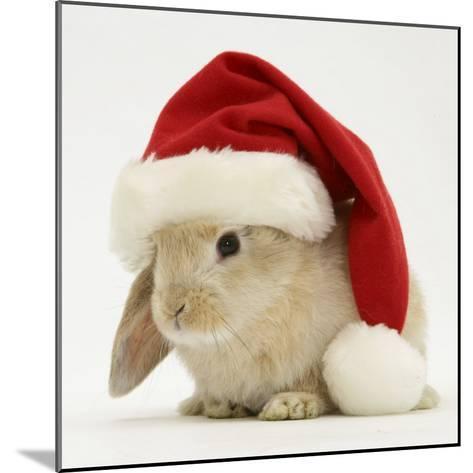 Rabbit Wearing a Father Christmas Hat-Jane Burton-Mounted Photographic Print