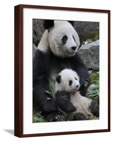 Giant Panda Mother and Baby, Wolong Nature Reserve, China-Eric Baccega-Framed Art Print