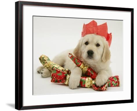 Golden Retriever Puppy with Christmas Crackers Wearing Paper Hat-Jane Burton-Framed Art Print