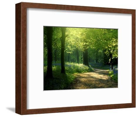 Track Leading Through Lanhydrock Beech Woodland with Bluebells in Spring, Cornwall, UK-Ross Hoddinott-Framed Art Print