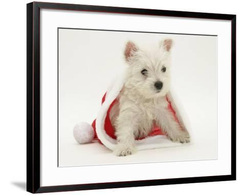 West Highland White Terrier Puppy in a Father Christmas Hat-Jane Burton-Framed Art Print