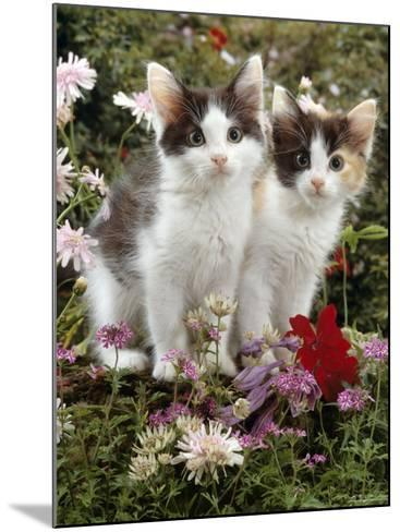 Domestic Cat, 9-Week, Black-And-White Kittens Among Flowers-Jane Burton-Mounted Photographic Print
