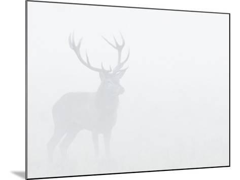 Red Deer Stag in Thick Fog, Dyrehaven, Denmark-Edwin Giesbers-Mounted Photographic Print