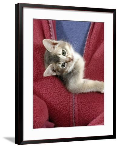 Person Carrying Domestic Cat, Blue Ticked Tabby Kitten Zipped into Front of Jacket-Jane Burton-Framed Art Print