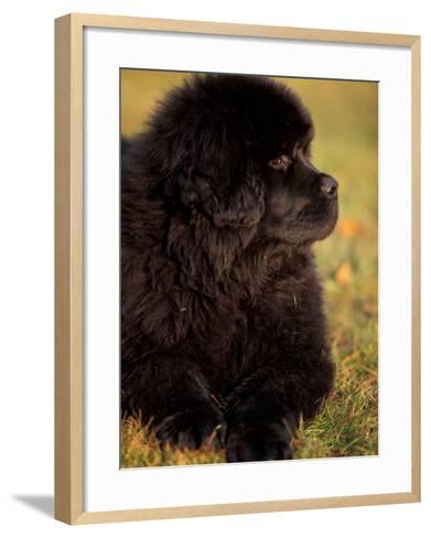 Profile Portrait of Young Black Newfoundland-Adriano Bacchella-Framed Art Print