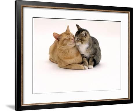 Domestic Cat Father, Red Male with His Agouti Tabby Male Kitten-Jane Burton-Framed Art Print