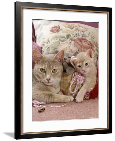 6-Week, Blue and Cream Kittens with Lilac Tortoiseshell Mother, Playing in Sewing Basket-Jane Burton-Framed Art Print