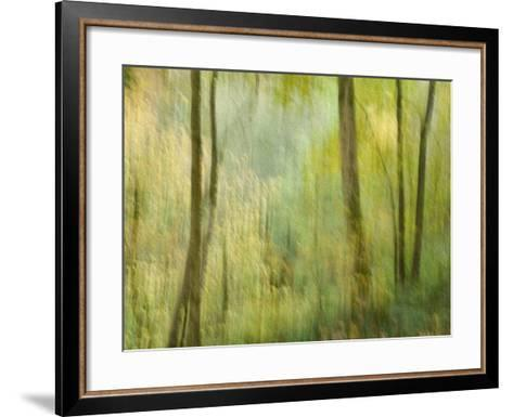 Impression of an Autumn Forest, North Lanarkshire, Scotland, UK, 2007-Niall Benvie-Framed Art Print
