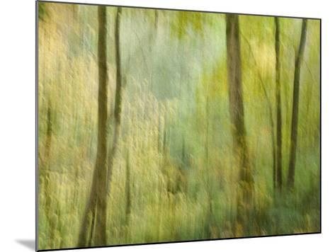 Impression of an Autumn Forest, North Lanarkshire, Scotland, UK, 2007-Niall Benvie-Mounted Photographic Print