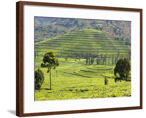 Tea Plantation Near Nyunguwe, Rwanda, Africa-Eric Baccega-Framed Art Print