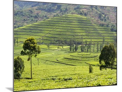 Tea Plantation Near Nyunguwe, Rwanda, Africa-Eric Baccega-Mounted Photographic Print