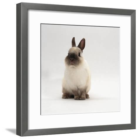 Seal-Point Netherland Dwarf Male Rabbit-Jane Burton-Framed Art Print