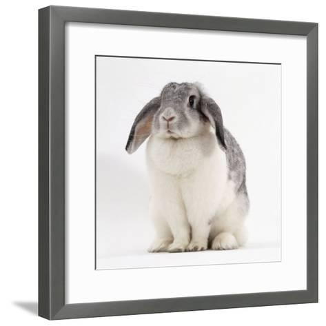 Female Silver and White French Lop-Eared Rabbit-Jane Burton-Framed Art Print