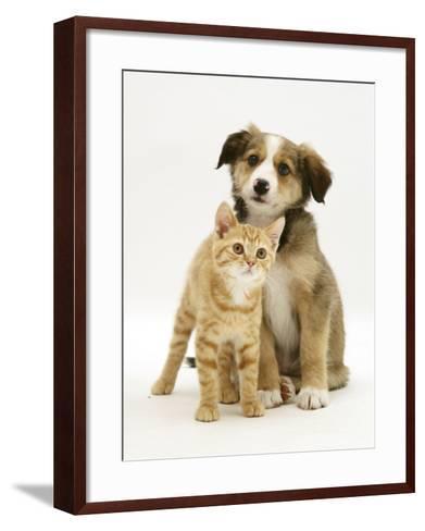 British Shorthair Red Tabby Kitten Sitting with Sable Border Collie Pup-Jane Burton-Framed Art Print