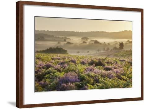 New Forest Heathland with Ling (Calluna Vulgaris) and Bell Heather (Erica Cinerea) Hampshire, UK-Guy Edwardes-Framed Art Print