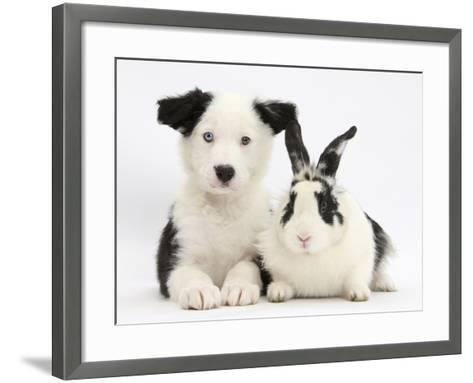 Black and White Border Collie Puppy and Black and White Rabbit-Mark Taylor-Framed Art Print