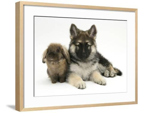 German Shepherd Dog (Alsatian) Bitch Puppy, Echo, with Lionhead Rabbit-Mark Taylor-Framed Art Print