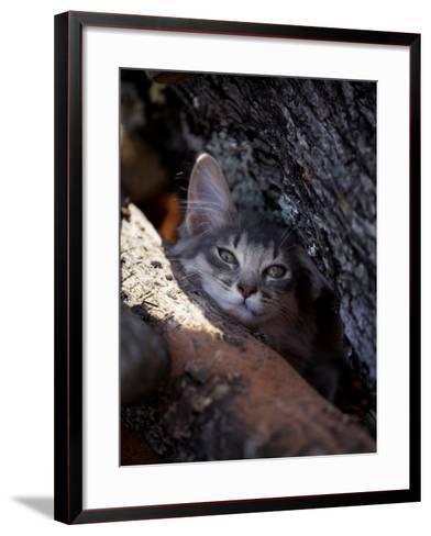 Somali Cat in Tree-Adriano Bacchella-Framed Art Print