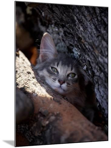Somali Cat in Tree-Adriano Bacchella-Mounted Photographic Print
