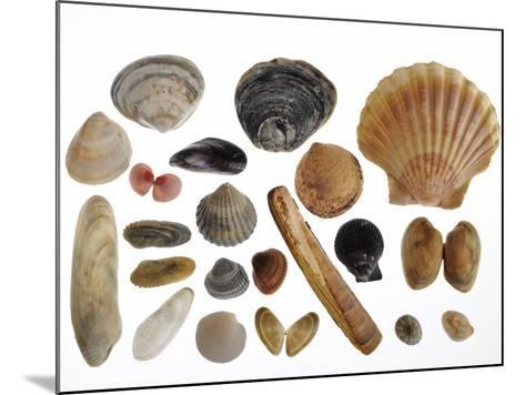 Collection of Shells from the North Sea-Philippe Clement-Mounted Photographic Print