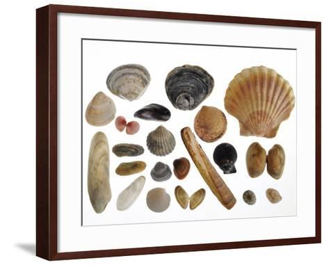 Collection of Shells from the North Sea-Philippe Clement-Framed Art Print