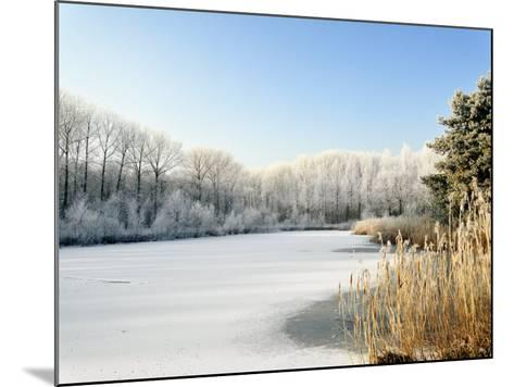 Hoarfrost Covered Trees Along Frozen Lake in Winter, Belgium-Philippe Clement-Mounted Photographic Print