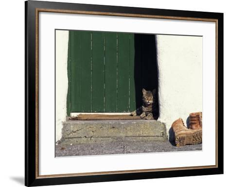 Tabby Cat Resting in Open Doorway, Italy-Adriano Bacchella-Framed Art Print