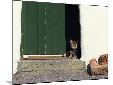 Tabby Cat Resting in Open Doorway, Italy-Adriano Bacchella-Mounted Photographic Print