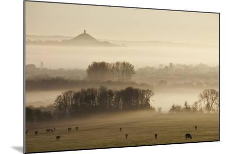 View Towards Glastonbury Tor from Walton Hill at Dawn, Somerset Levels, Somerset, England, UK-Guy Edwardes-Mounted Photographic Print