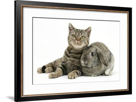 British Shorthair Brown Spotted Cat, Tiger Lily, with Agouti Lop Rabbit-Mark Taylor-Framed Art Print