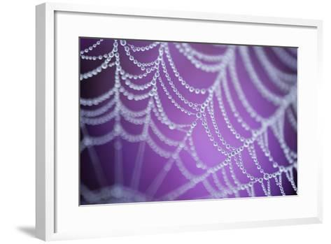 Dew Covered Spider's Web with Pink Flowering Heather in the Background, Dorset, UK-Ross Hoddinott-Framed Art Print