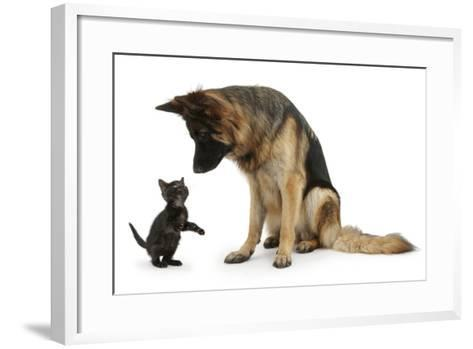German Shepherd Dog Bitch, Coco, Looking Down on Black Kitten-Mark Taylor-Framed Art Print