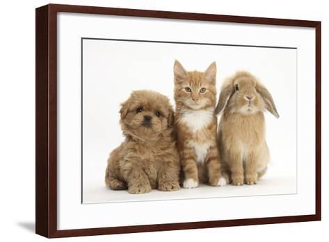 Peekapoo (Pekingese X Poodle) Puppy, Ginger Kitten and Sandy Lop Rabbit, Sitting Together-Mark Taylor-Framed Art Print
