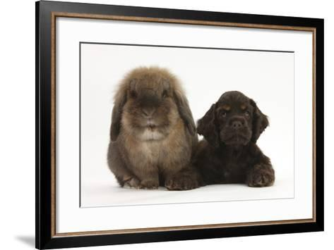 American Cocker Spaniel Puppy and Lionhead-Cross Rabbit-Mark Taylor-Framed Art Print