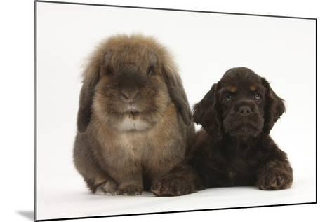 American Cocker Spaniel Puppy and Lionhead-Cross Rabbit-Mark Taylor-Mounted Photographic Print