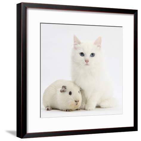 White Main Coon-Cross Kitten with White Guinea Pig-Mark Taylor-Framed Art Print