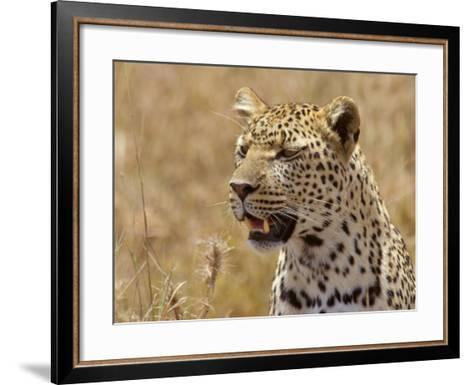 Leopard Portrait, Tanzania-Edwin Giesbers-Framed Art Print