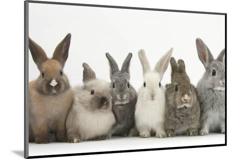 Six Baby Rabbits in Line-Mark Taylor-Mounted Photographic Print