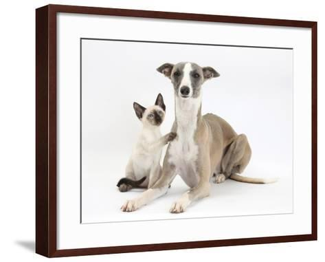 Whippet Bitch, with Siamese Kitten, 10 Weeks-Mark Taylor-Framed Art Print