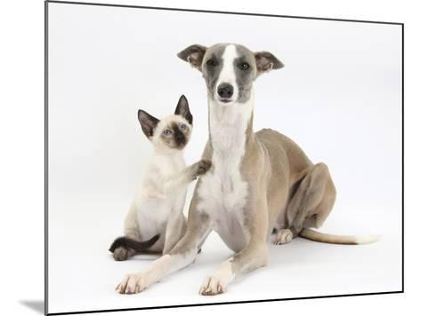 Whippet Bitch, with Siamese Kitten, 10 Weeks-Mark Taylor-Mounted Photographic Print