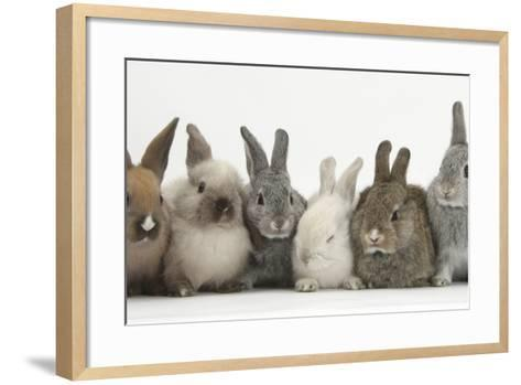 Six Baby Rabbits in Line-Mark Taylor-Framed Art Print