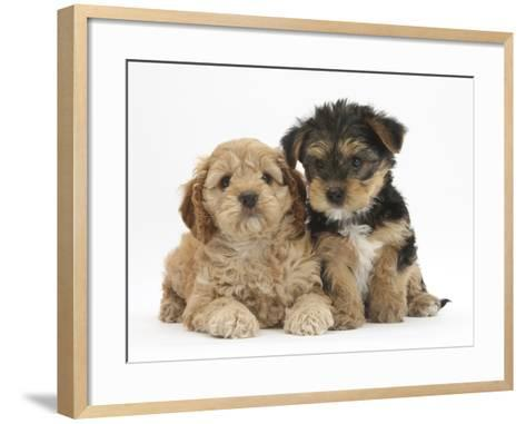 Cavapoo Puppy, 7 Weeks, and Yorkshire Terrier Puppy, 8 Weeks-Mark Taylor-Framed Art Print
