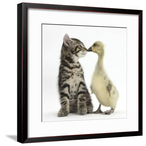 Cute Tabby Kitten, Fosset, 9 Weeks, Nose to Beak with Yellow Gosling-Mark Taylor-Framed Art Print