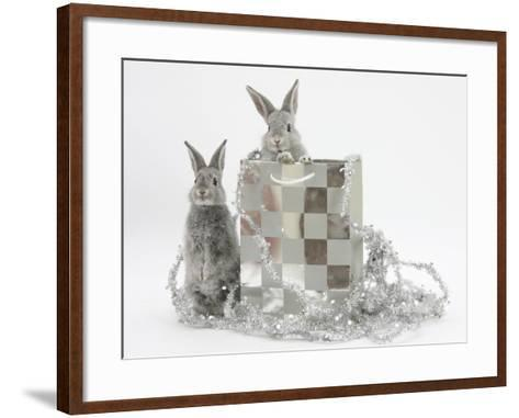 Two Baby Silver Rabbits in a Gift Bag with Christmas Tinsel-Mark Taylor-Framed Art Print