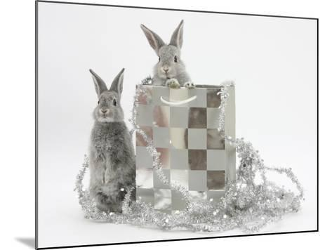 Two Baby Silver Rabbits in a Gift Bag with Christmas Tinsel-Mark Taylor-Mounted Photographic Print