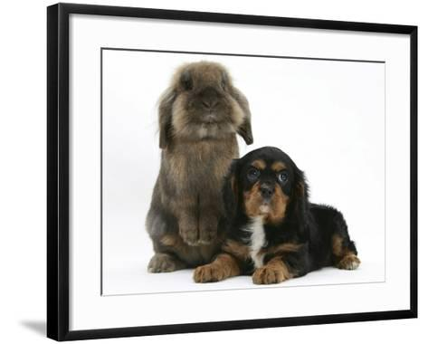 Black-And-Tan Cavalier King Charles Spaniel Puppy and Lionhead Rabbit-Mark Taylor-Framed Art Print