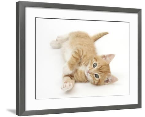 Ginger Kitten Rolling on His Back-Mark Taylor-Framed Art Print