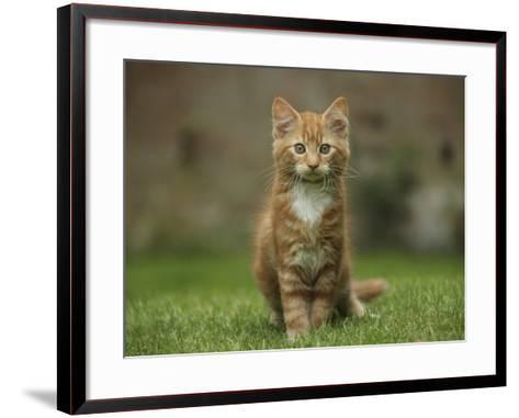 Portrait of a Ginger Kitten on Grass-Mark Taylor-Framed Art Print