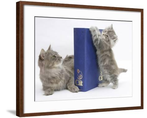Maine Coon Mother Cat, Serafin, with Kitten Reaching with Paws on 'Your Cat' Binder-Mark Taylor-Framed Art Print