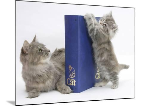Maine Coon Mother Cat, Serafin, with Kitten Reaching with Paws on 'Your Cat' Binder-Mark Taylor-Mounted Photographic Print